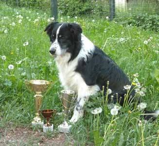 Kidd with his trophies from the agility trial